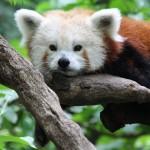 姫路動物園の入園料が無料 – 姫路城オープンイベント | 2015