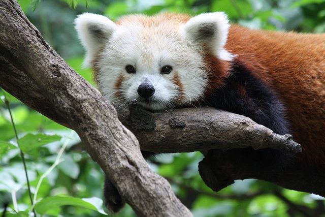 姫路動物園の入園料が無料 - 姫路城オープンイベント | 2015