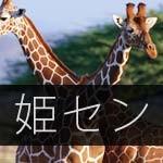【姫セン】キリンの赤ちゃんの名前が決まったみたい