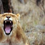 バイトのストレスですぐ辞めたい!「怒りMAX時に解消する5つの方法」